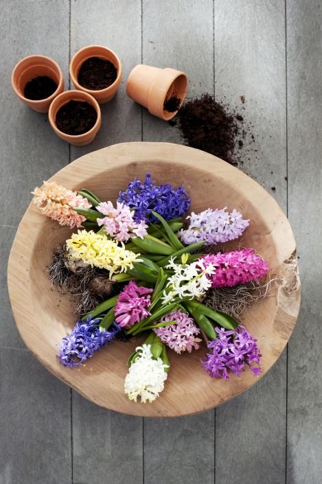 12.hyacint.5