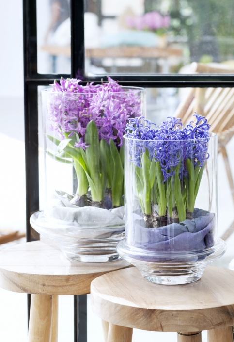 12.hyacint.8