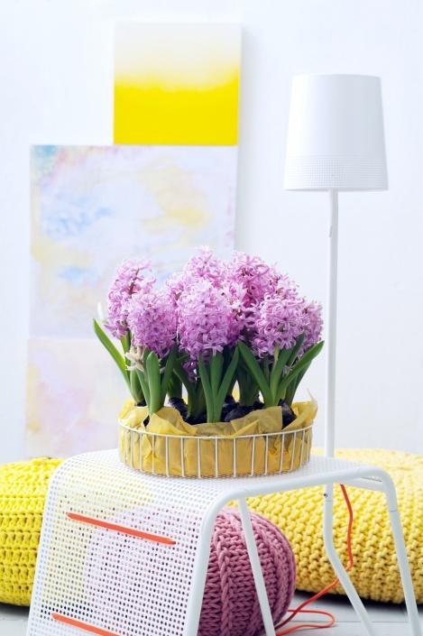 12.hyacint.9