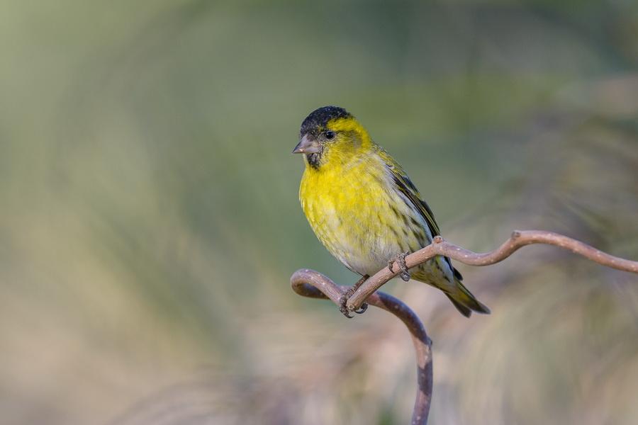 Bordas-bird-garden-bordas-gava