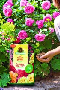 abono-rosas-bordas