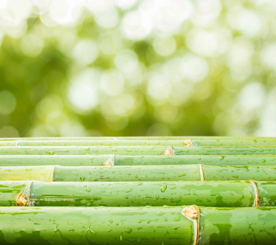 bambu-bordas