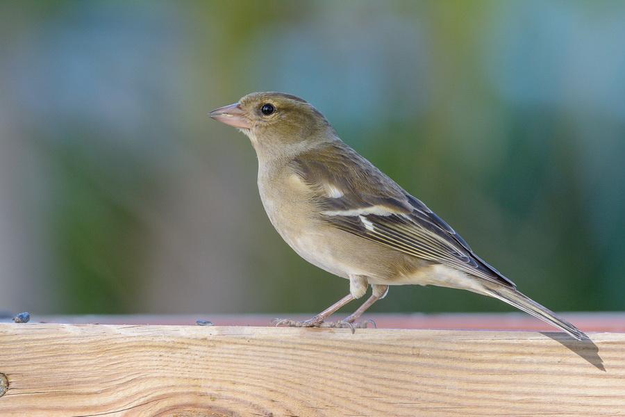 bordas-bird-Garden-Center-Bordas