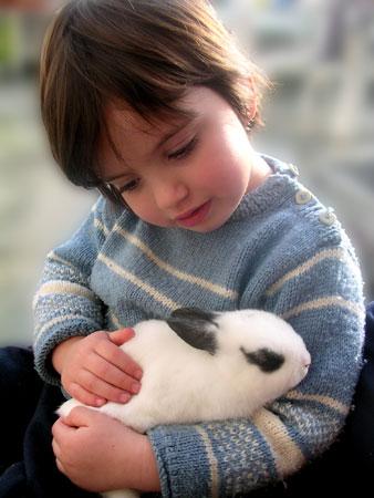 conill-mascotes-bordas