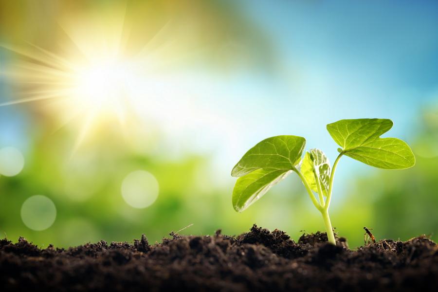 exposición-plantas-bordas-sol-sombrs