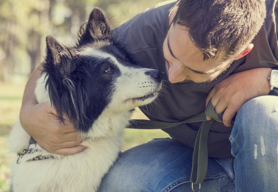 gossos-bordas