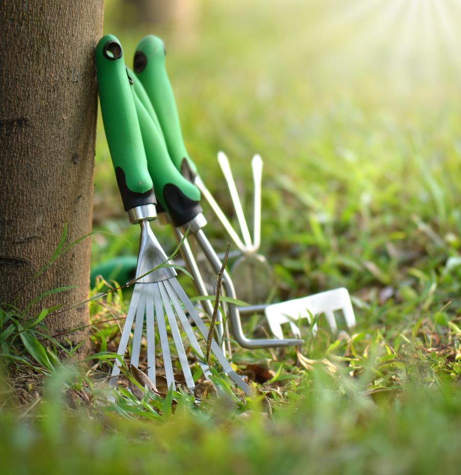 jardineria-bordas-juliol