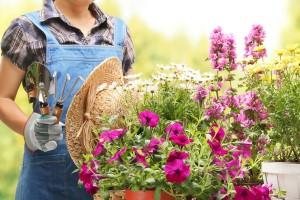 jardineria-bordas