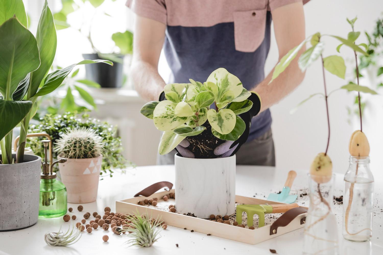 Com estalviar practicant la jardineria.