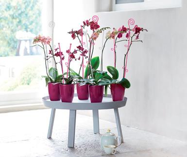 orquideas-tutos-bordas-elho