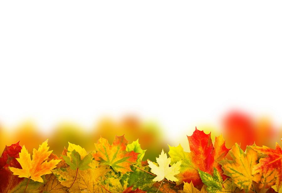 otoño-garden-bordas