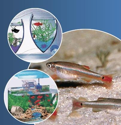 peixos-mascotes-bordas