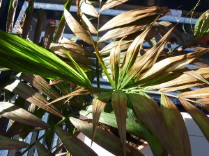 planta-quemada-sol-bordas