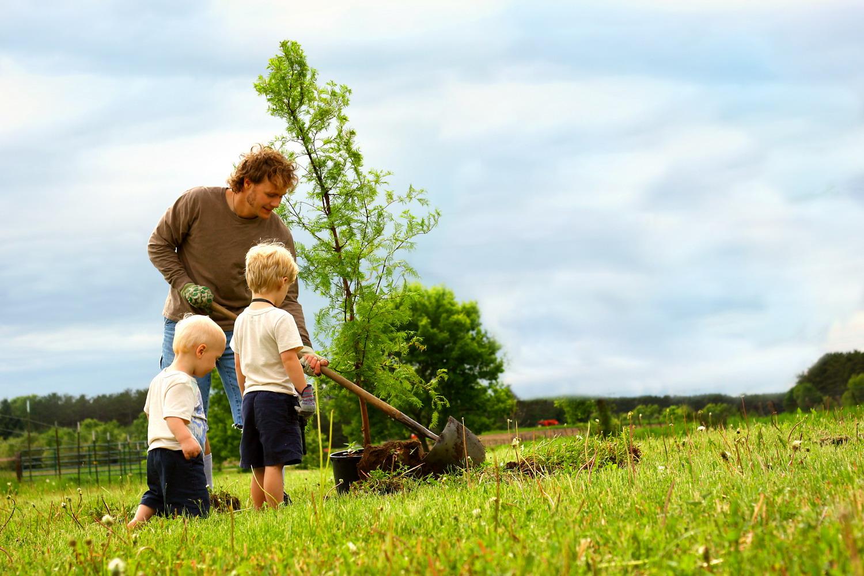 Los imprescindibles antes de plantar un árbol.