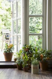 Plantas-interior-bordas
